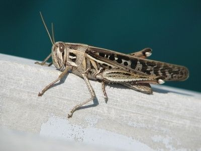 Why Is a Cricket a Sign of Good Luck?  Crickets have played a strong role throughout Chinese, Japanese and Native American cultures as a symbol of good fortune, vitality and prosperity.    Read more: Why Is a Cricket a Sign of Good Luck? | eHow.com http://www.ehow.com/about_6134121_cricket-sign-good-luck_.html#ixzz25Sb7R71p