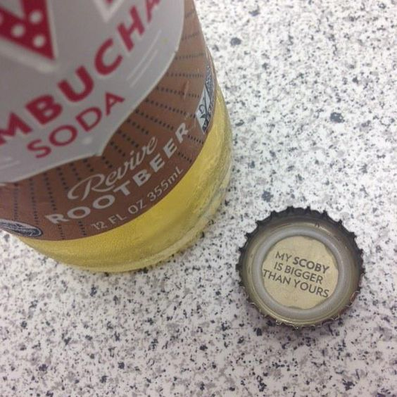 http://ift.tt/1DcOAdJ This is likely true. My #scoby is massive. One more brew on conti… http://kombuchaguru.com