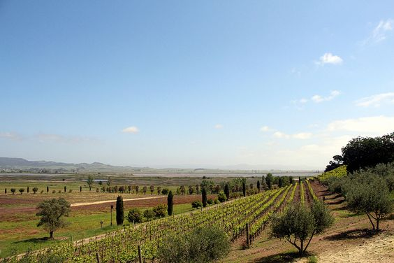 Viansa Winery | View from the driveway, Sonoma, CA www.eddie-hernandez.com