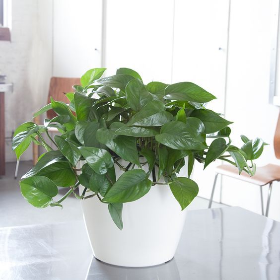 Pinterest the world s catalog of ideas - Five indoor plants that absorb humidity ...