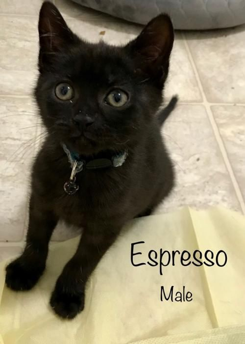 Adopt Espresso On With Images Cat Adoption Help Homeless Pets Homeless Pets