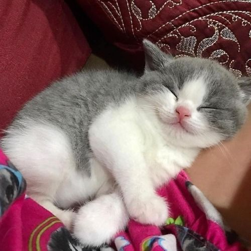 World Sleep Day 7 Cute Sleepy Cats Who Just Can T Stay Awake Videos Kittens Cutest Sleeping Kitten Cute Cats