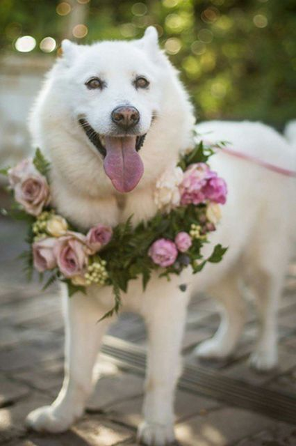 dog wreath wedding ceremony incorporating including