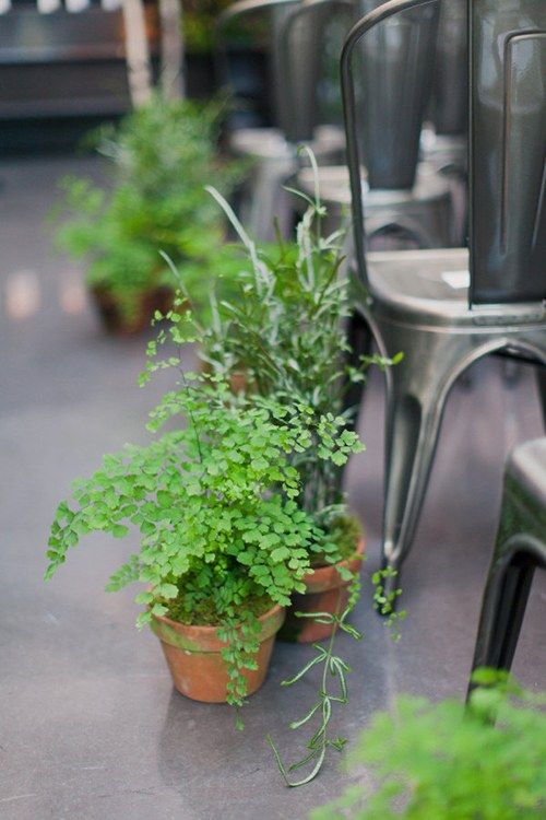 budget backyard wedding ceremony decorations minimalist potted plants aisle
