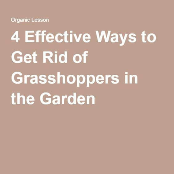 4 Effective Ways to Get Rid of Grasshoppers in the Garden
