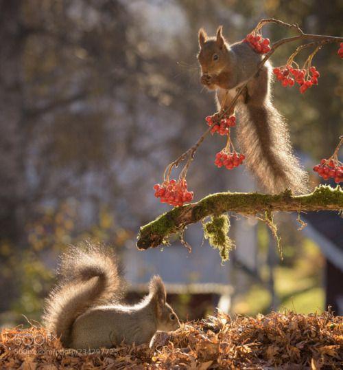 Pin Auf So Cute Animals