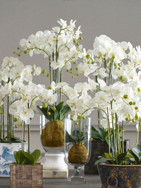 Orchid Arrangement Www Carolynsfloraldesigns Com Fresh Flowers Arrangements Church Flower Arrangements Flower Arrangement Designs