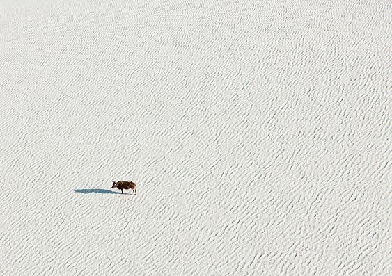 Aerial Botswana   Miss Moss