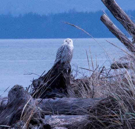 Ocean Shores Washington | Damon Point Reviews - Ocean Shores, WA Attractions - TripAdvisor