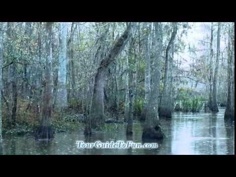 Louisiana Swamp Tour near New Orleans by http://www.tourguidetofun.com/blowin-round-nola/ #NOLA #FrenchQuarter #NewOrleans #Travel #Tourism