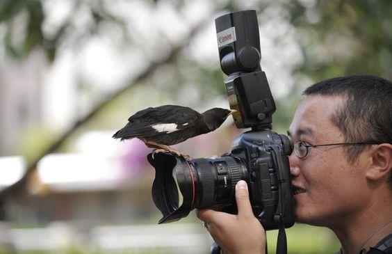 Bon ! On regarde le petit oiseau!