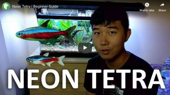 How Many Neon Tetras In A 5 Gallon Tank You Won T Believe How Many Neon Tetra Neon 5 Gallon Aquarium