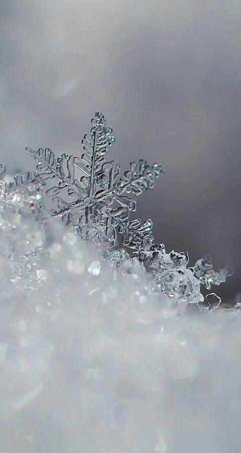 Shiu Debora Image By Mona Moni Snowflake Wallpaper Winter
