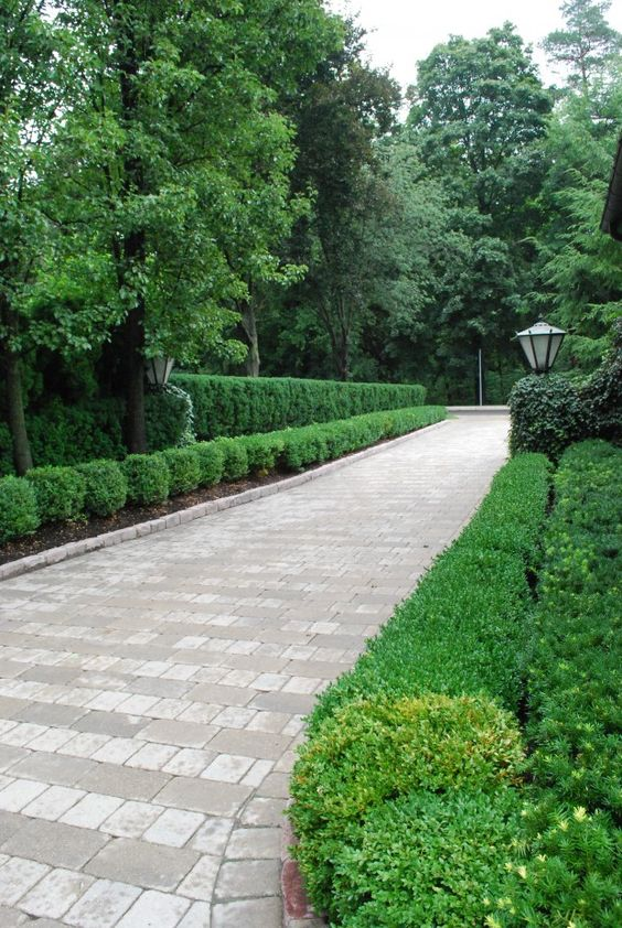 Driveways, Boxwood hedge and Hedges on Pinterest