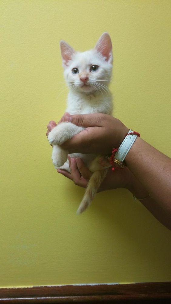 Mom got her first kitten today (: