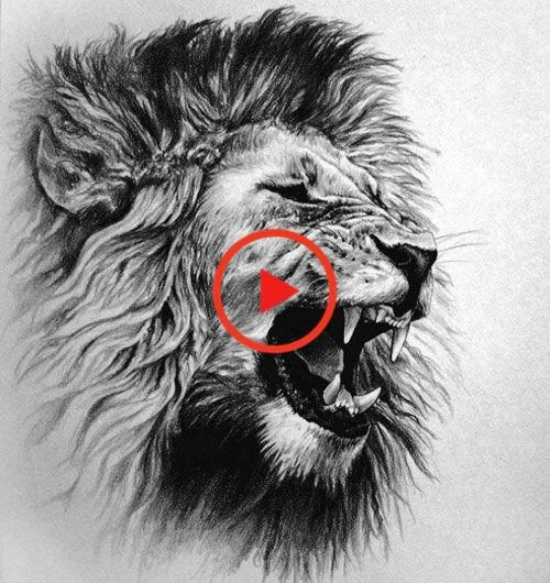 125 Best Lion Tattoos For Men In 2020 Mens Lion Tattoo Lion Tattoo Lion Tattoo Design