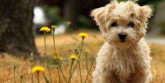 15 Dog Breeds That Don T Smell With Images Cute Dogs Images