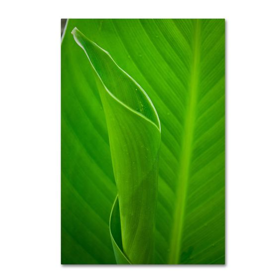 Pipa Fine Art 'Leaves Canna Lily' Canvas Art