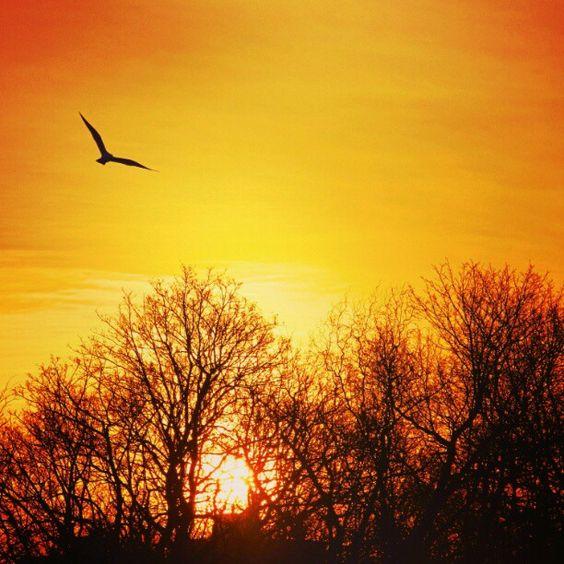 Beautiful Spring Sunrises!  Photo by iamaustinhk