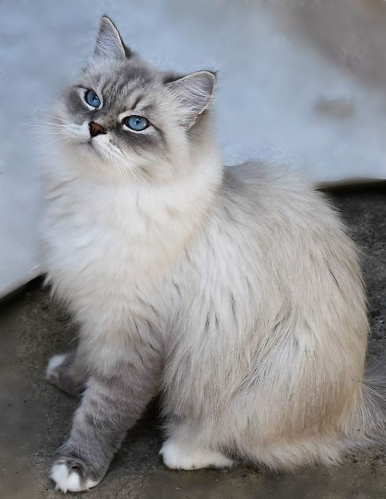 These Special Kittens Will Make You Amazed Cats Are Wonderful Creatures Cataesthetic Pets Pretty Cats Cats And Kittens