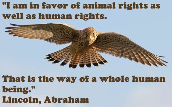 animal rights a human dilemma Animal rights: a human dilemma the ills of society extend the continuum from overpopulation to obesity and global warming to the extinction of life, as we know it to .