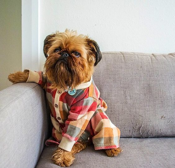 That doggie with pyjama is adorable!