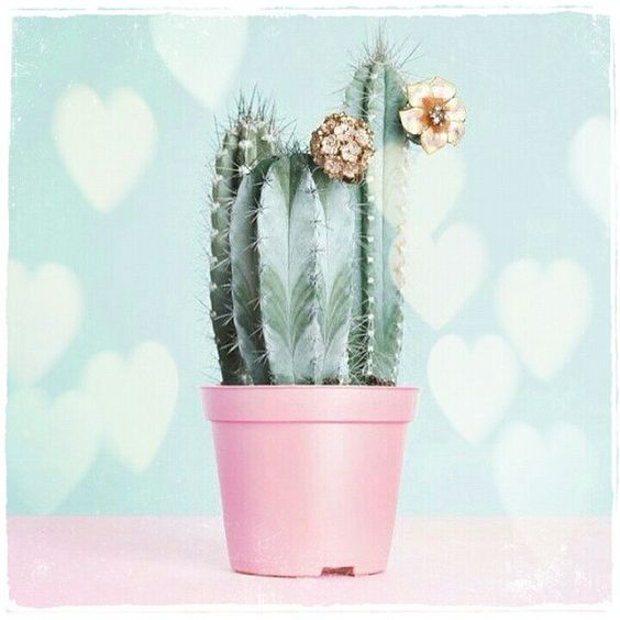 #cactus still life #pink pot by mirinconcito_83