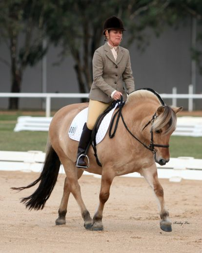 Norwegian Fjord Horses and Scottish Highland Ponies Our stud was established in 1985 and is located in picturesque Upper Beaconsfield, Victoria. Our aim is to produce quality ponies who are typical...