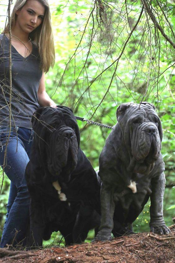 Bosco & Baronessa