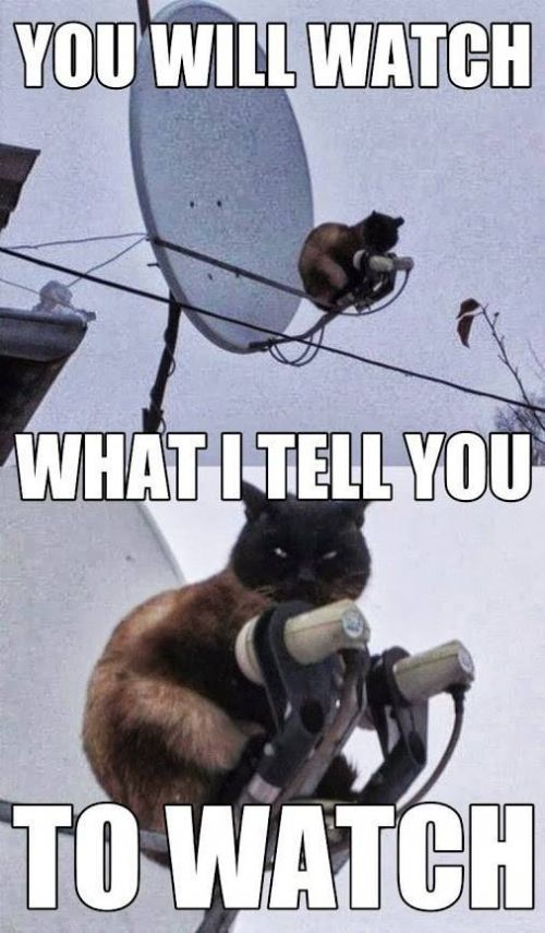 Looks Like Animal Planet Meme | Slapcaption.com
