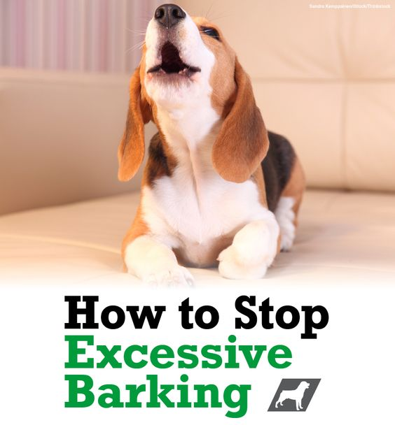 how to stop dog barking at other