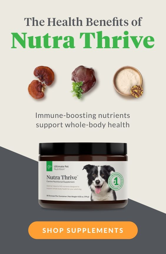 Add This To Your Dog S Food To Help Them Be Healthier Animal
