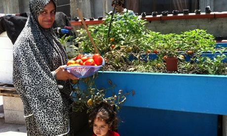 FAO : Urban aquaponic systems have proven to be successful in providing an environmentally sustainable solution to ensure food and nutrition security and to protect the livelihoods of the most vulnerable.