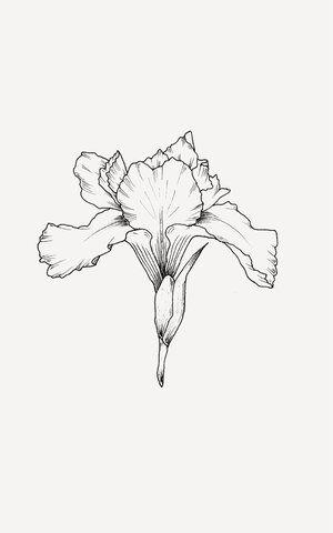 Botanical Art In 2020 Flower Line Drawings Line Art Flowers Line Art Drawings