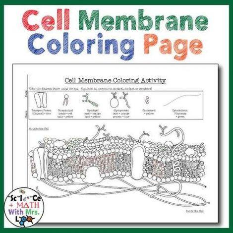 Pin On Teaching Cells