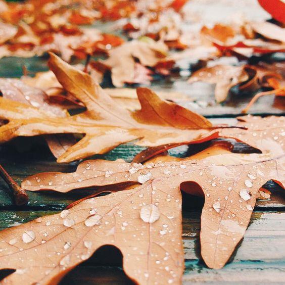 I love the oak leaves by punkodelish