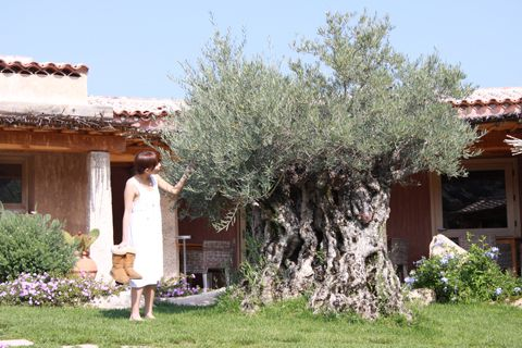"Olivo.  ""Higuchi sabor, gusto Chieko Chieko Higuchi blog oficial: Sardegna2-Hotel Petra Segreta1. ""."