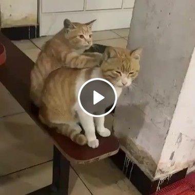 Nossa gata, eu tive um dia puxado, me faz uma massagem por favor