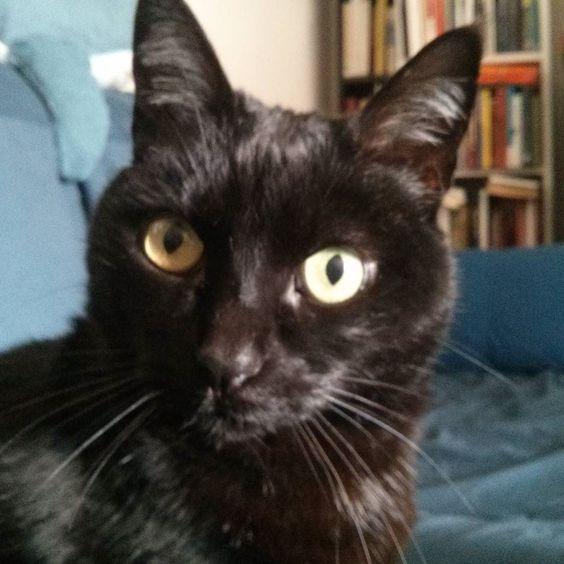Qué estás haciendo? #gatonegro #gato #sora #gatanegra #blackcat #cat #catsofinstagram #lovelycat #gatosdeinstagram #gatosdelmundo #pelusa #pelusanegra #amordegato #catslove #catslover #catstagram #catexperience #gatovago #catoftheday #crazycatlady #caturdays365 #caturday
