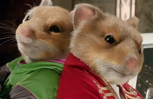 Soul Hamsters Funny Car Photos Pinterest Hamsters