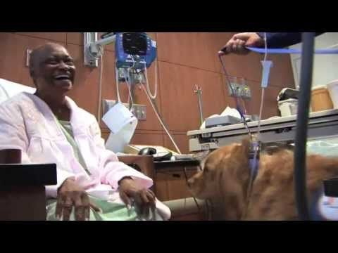 In honor of National Dog Day, we want to take a moment to recognize some four-legged members of our patient care team...our therapy dogs! Check out this video about the way these canines help patients on our oncology unit.