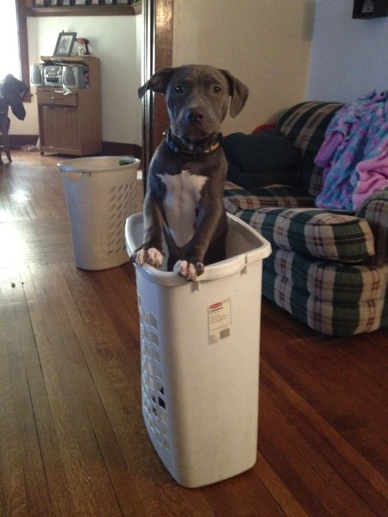 This is my childrens idea of FUN lol  Poor dog! (NOTE-No animals were hurt in the making of this picture! lol)