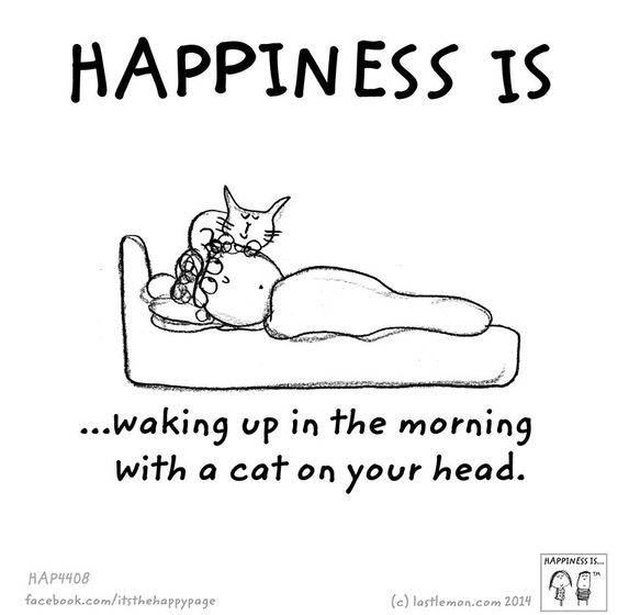 .This happens to me every night....I don't think I could actually sleep without my cat on my pillow above my head...the purring puts me to sleep....love my kitties <3: