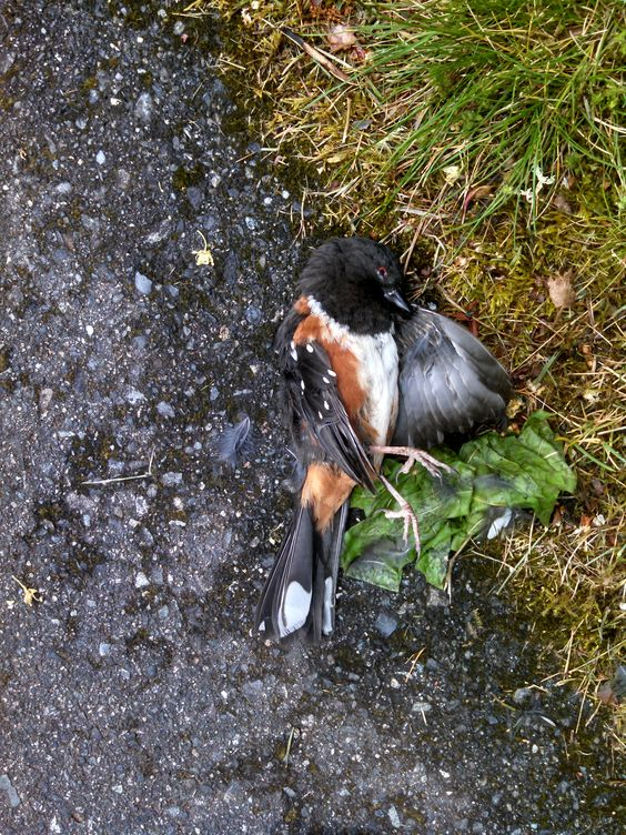 Dead bird with a haunting stare.