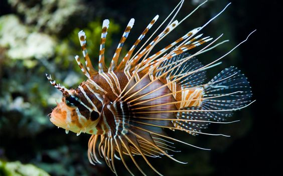 Spikey tropical fish