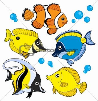Different Types Of Fish Art Animals Pinterest