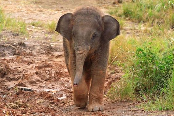 Welcome to #WorldElephantDay – today we're celebrating all things elephant. Join us and help us share our message.  https://www.facebook.com/elephantfamily/photos/np.1439369604631271.572805919/10153021551927321/?type=1&notif_t=notify_me_page