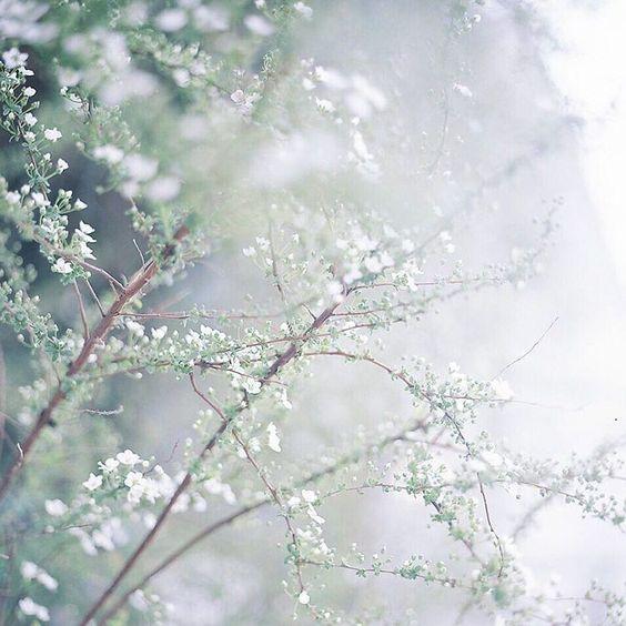 . . . 結いのおと ⑥ ファミーユの入り口で迎えてくれたユキヤナギ 3月のファミーユは、花たちでにぎやかでした✼ . . 今日から4月 ひとの想いは 相手があってこそなんだよね 忘れずにいたい