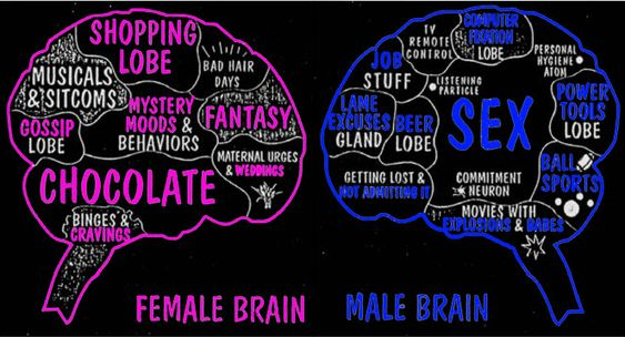 biological sex differences in the brain in Goulburn