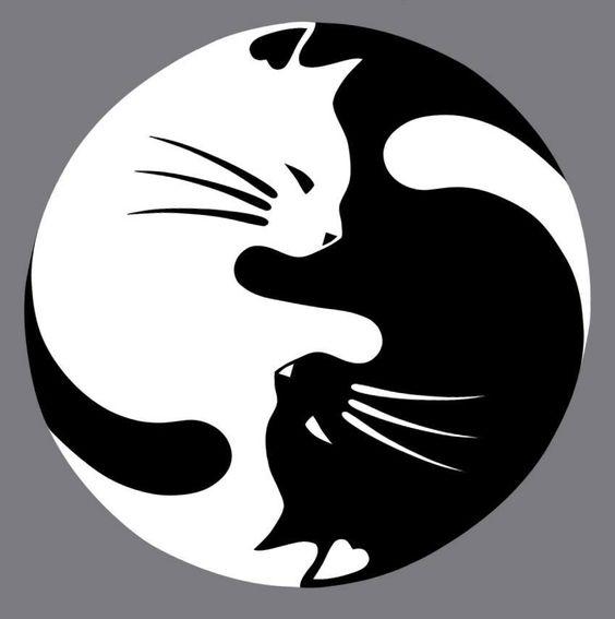 el ying yang gatuno no todos los gatos negros dan mala suerte sobre todo si tienen un compañero gato blanco....: